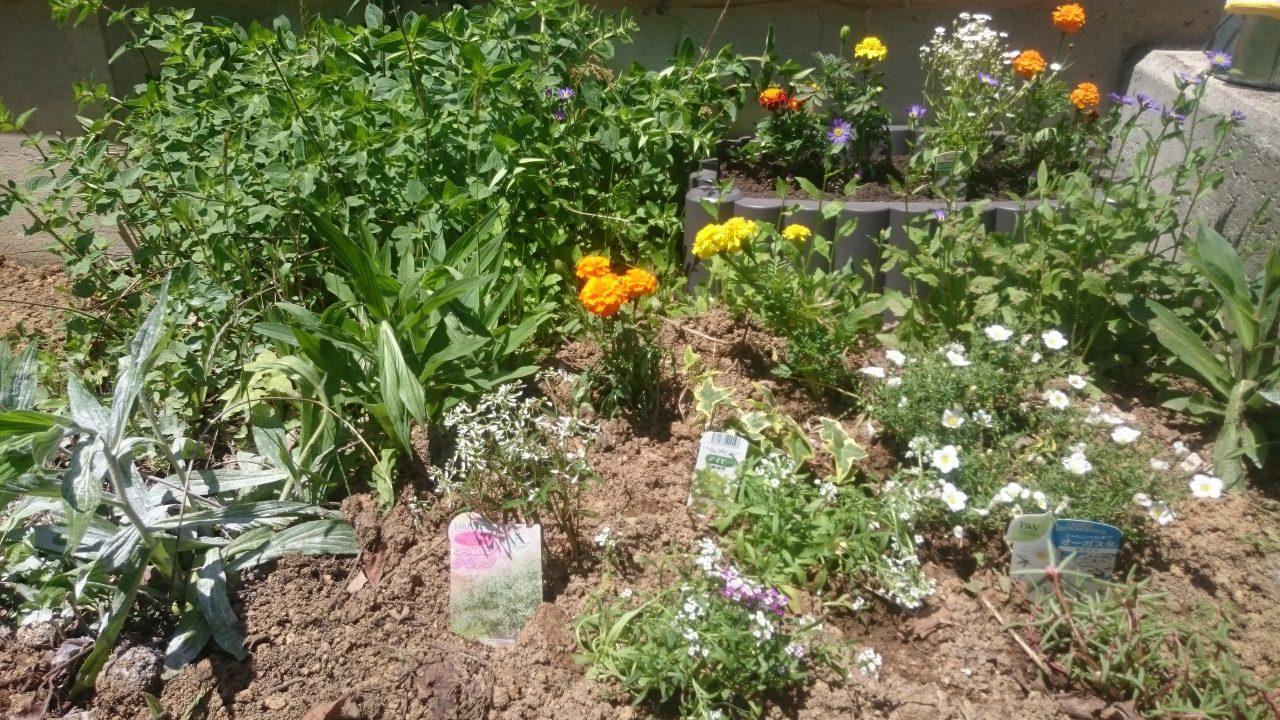 最初の花壇