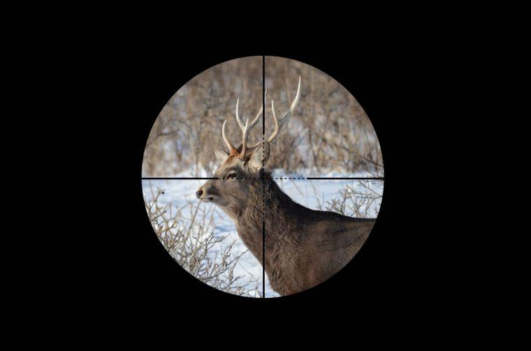 北海道の狩猟