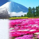 ニセコの四季