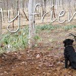 鳥のさえずりを聞く犬